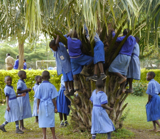 Children climbing a tree
